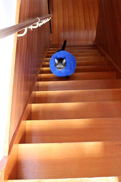 階段のぼります