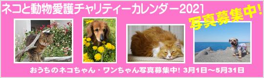 ネコと動物愛護チャリティーカレンダー2021、おうちのネコちゃん・ワンちゃん写真募集