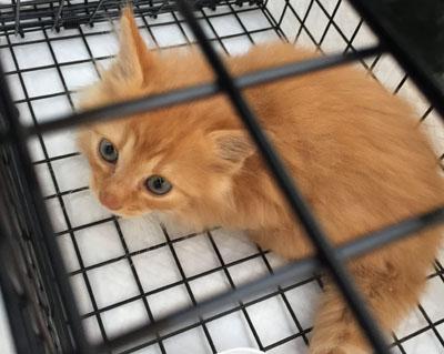 子猫保護のための捕獲ー2