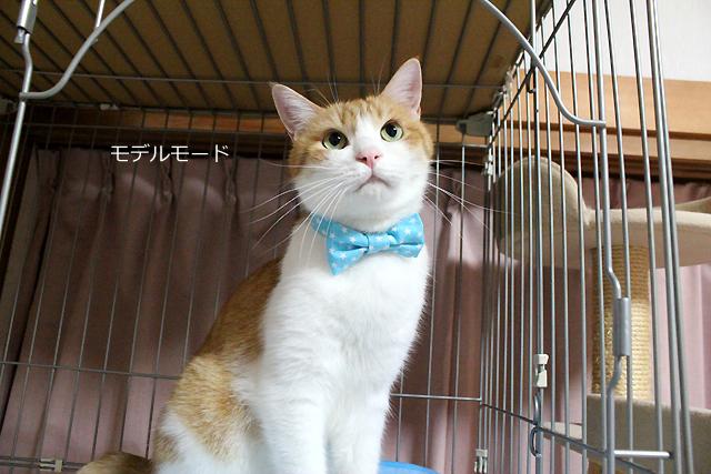 猫のおしゃれリボン、スター柄ブルー