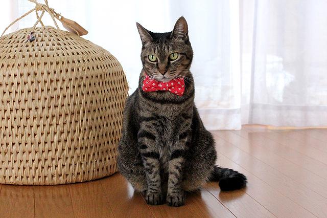 猫のおしゃれリボン、スター柄レッド@猫堂