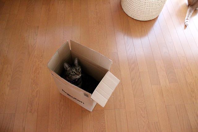 箱猫おめぐさん