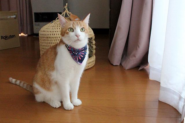 猫の首輪用付け替えバンダナ
