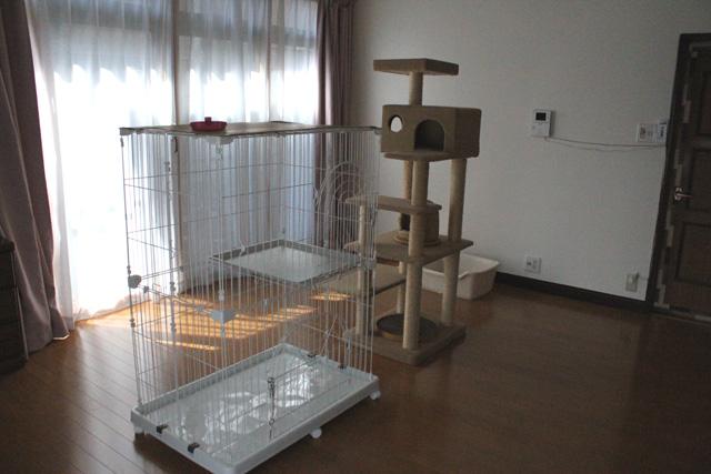 保護猫部屋