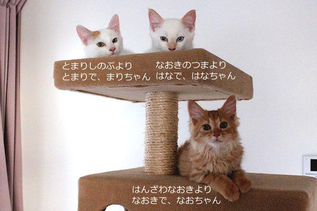 保護猫たちの仮名