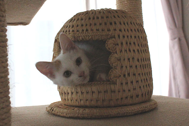まりちゃんも小さい猫つぐら