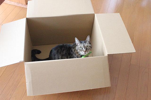 おめぐさんも箱猫