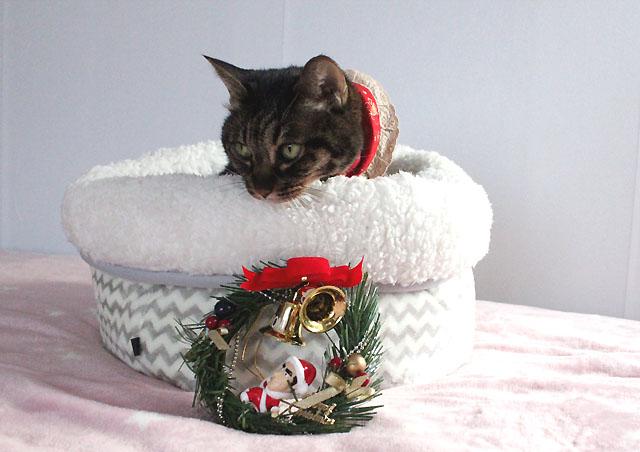 クリスマスプレゼントってことで