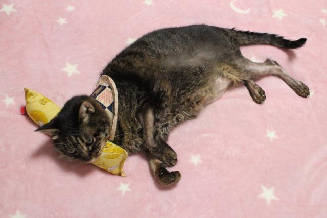 またたび入り手作りキッカー「バナナ猫」