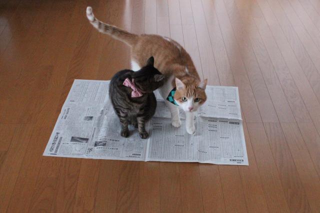 新聞紙一枚で意外と楽しい♪