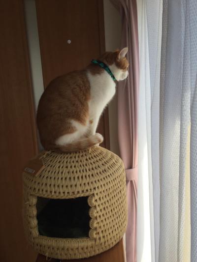 猫つぐらの上