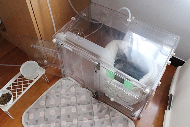 酸素ハウス