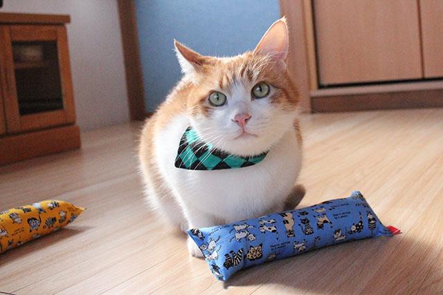 モデル猫をちび