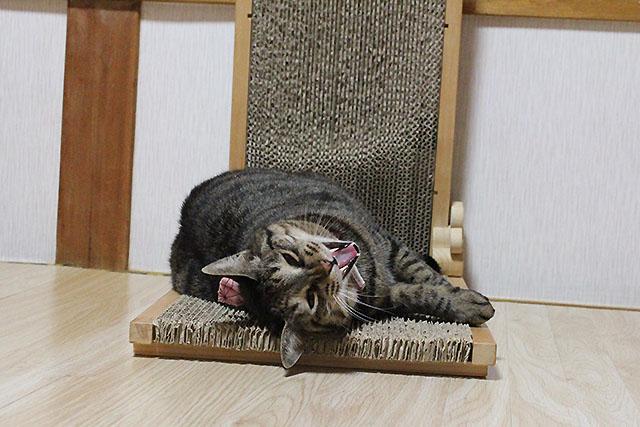猫の手作りつめとぎ@猫堂