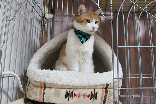 鬼滅の刃柄猫のおしゃれ首輪
