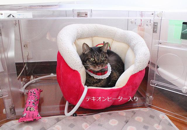 テキオンヒーター入りりんごちゃんベッド