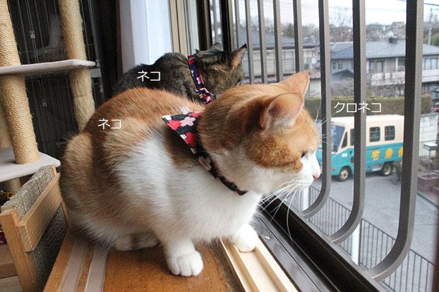 ネコとクロネコ
