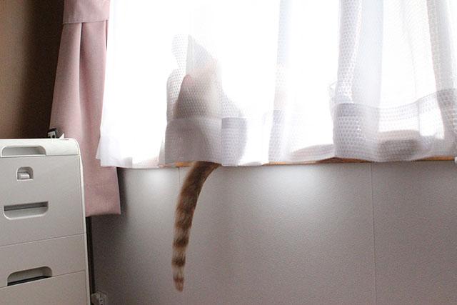 出窓にをちび
