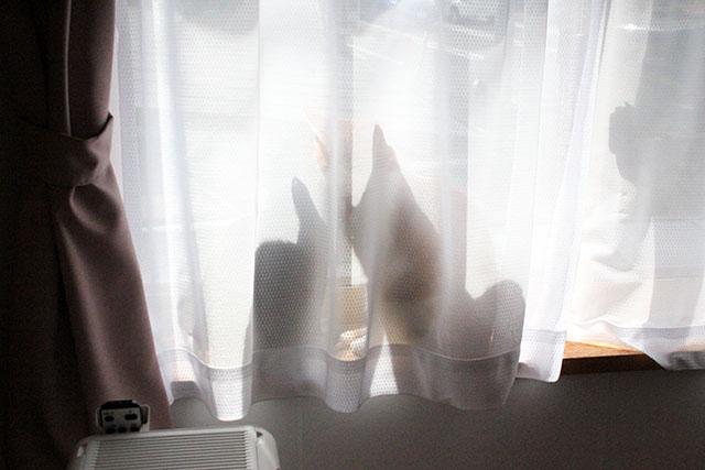 ちゃあ部屋の窓