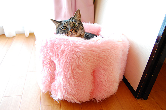 ちゃあINピンクのふわふわベッド