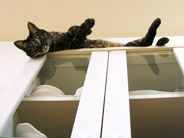 食器棚の上