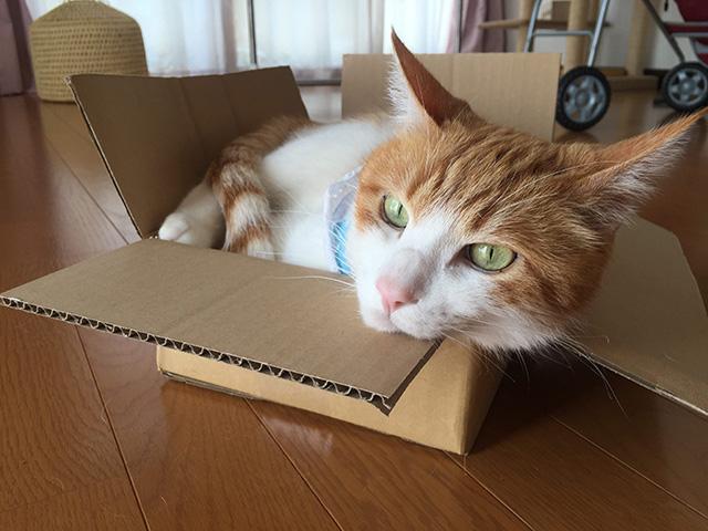 箱猫をちび