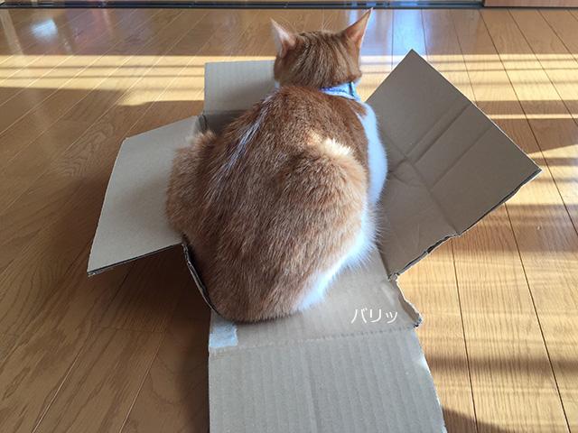 コンパクトな箱猫?