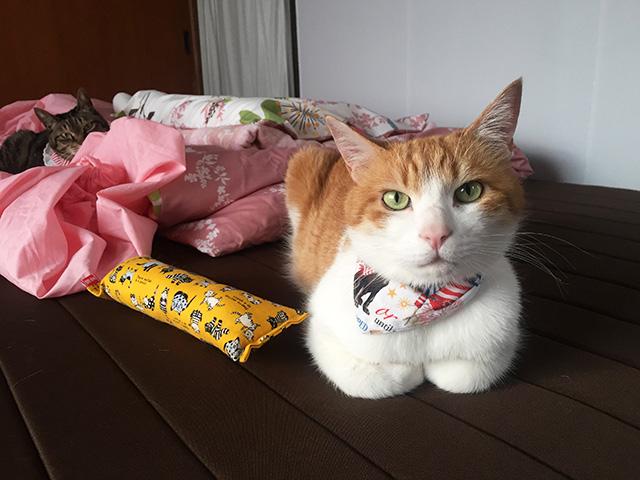 猫の香箱座り