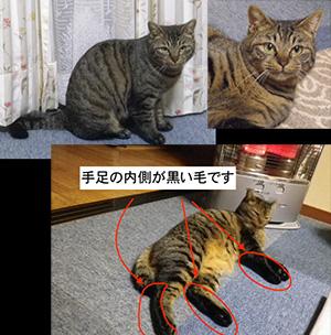 猫を探しています(長野県長野市)