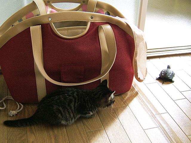 ちゃあさんのキャリーバッグ