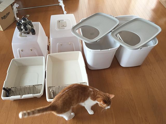 猫トイレ洗った