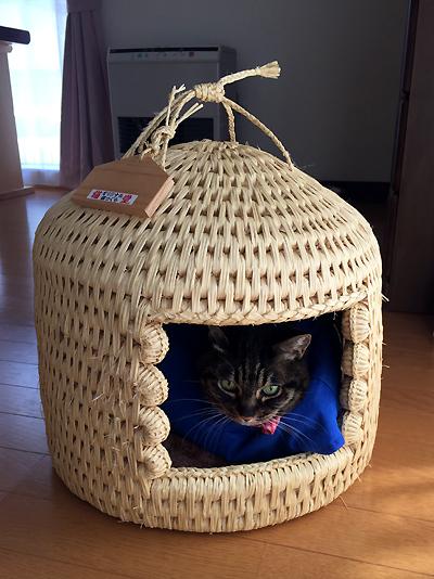 猫つぐらでお昼寝ちゃあさん