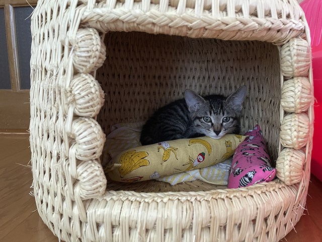 猫つぐらにおもちゃを持ち込みます