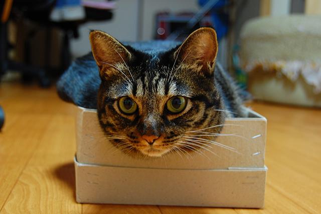 2009年8月31日撮影、小さいダンボール箱