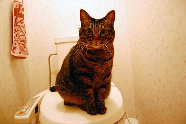 2009年11月26日撮影、トイレ