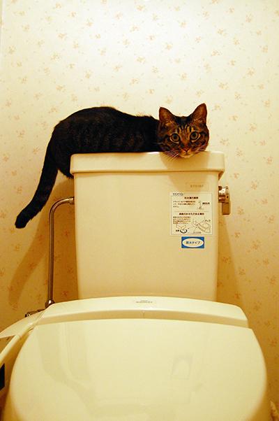 2009年11月26日撮影、トイレのタンク