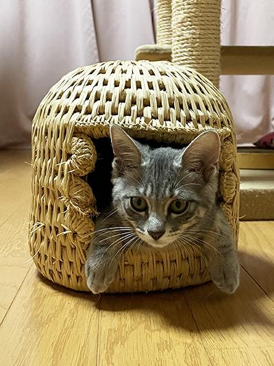 小さい猫つぐらに